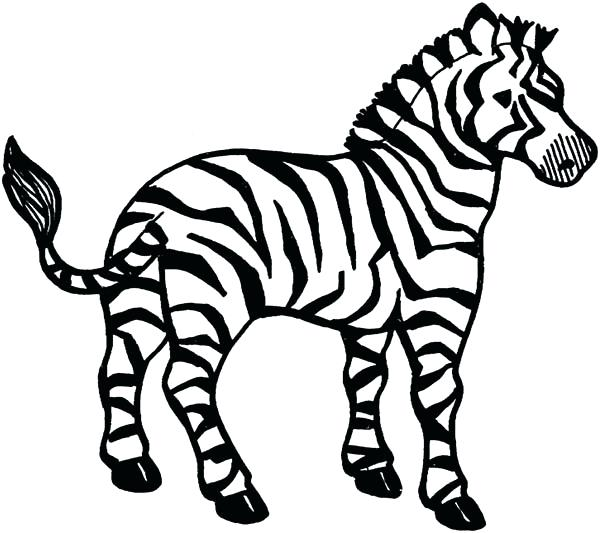 600x533 Baby Zebra Coloring Pages Pictures Of Zebras Speaks Brilliant