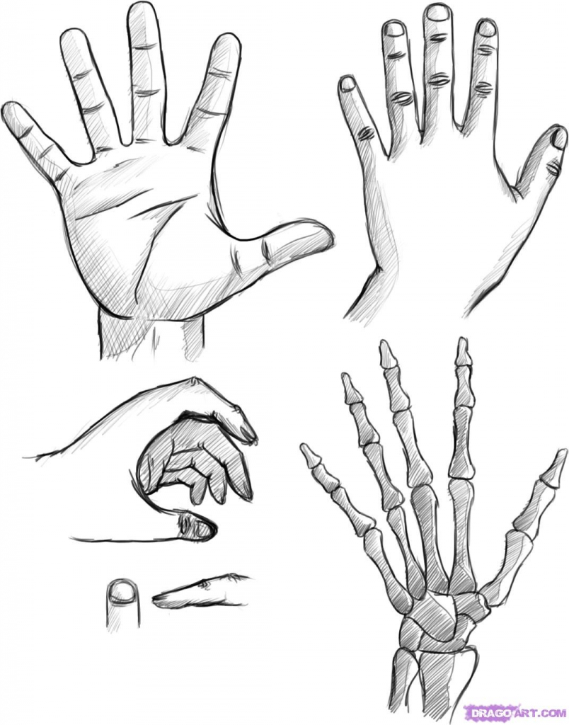 804x1024 Easy Hand Drawings How To Draw Hands Front And Back
