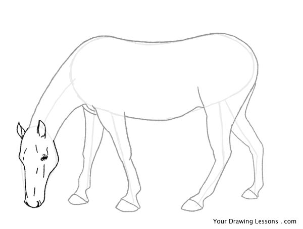 600x455 How To Draw A Horse Part 2 Your Drawing Lessons