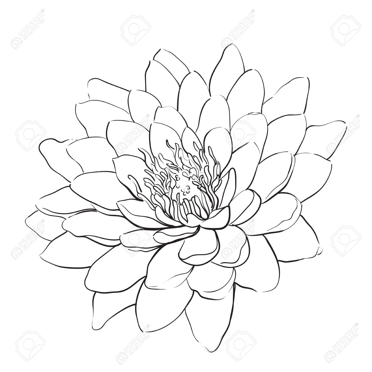 1300x1299 Lotus Flower Outline Drawing Outline Lotus Flower On White