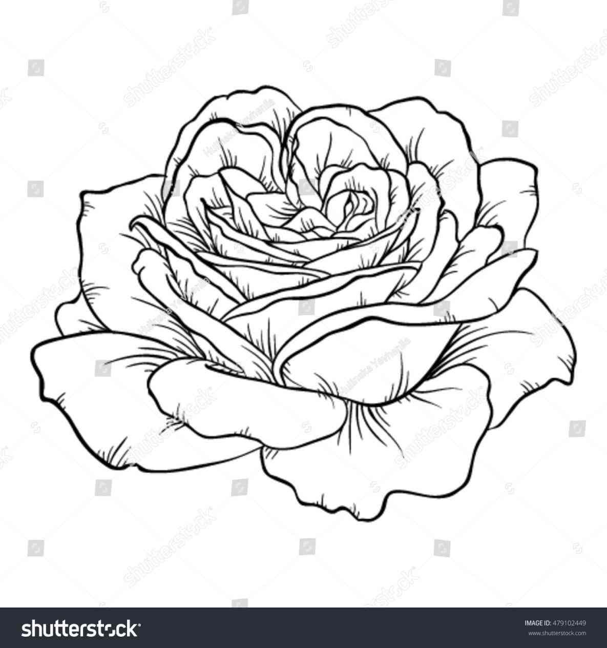1185x1264 White Rose Black Background Drawing Freespywarefixescom
