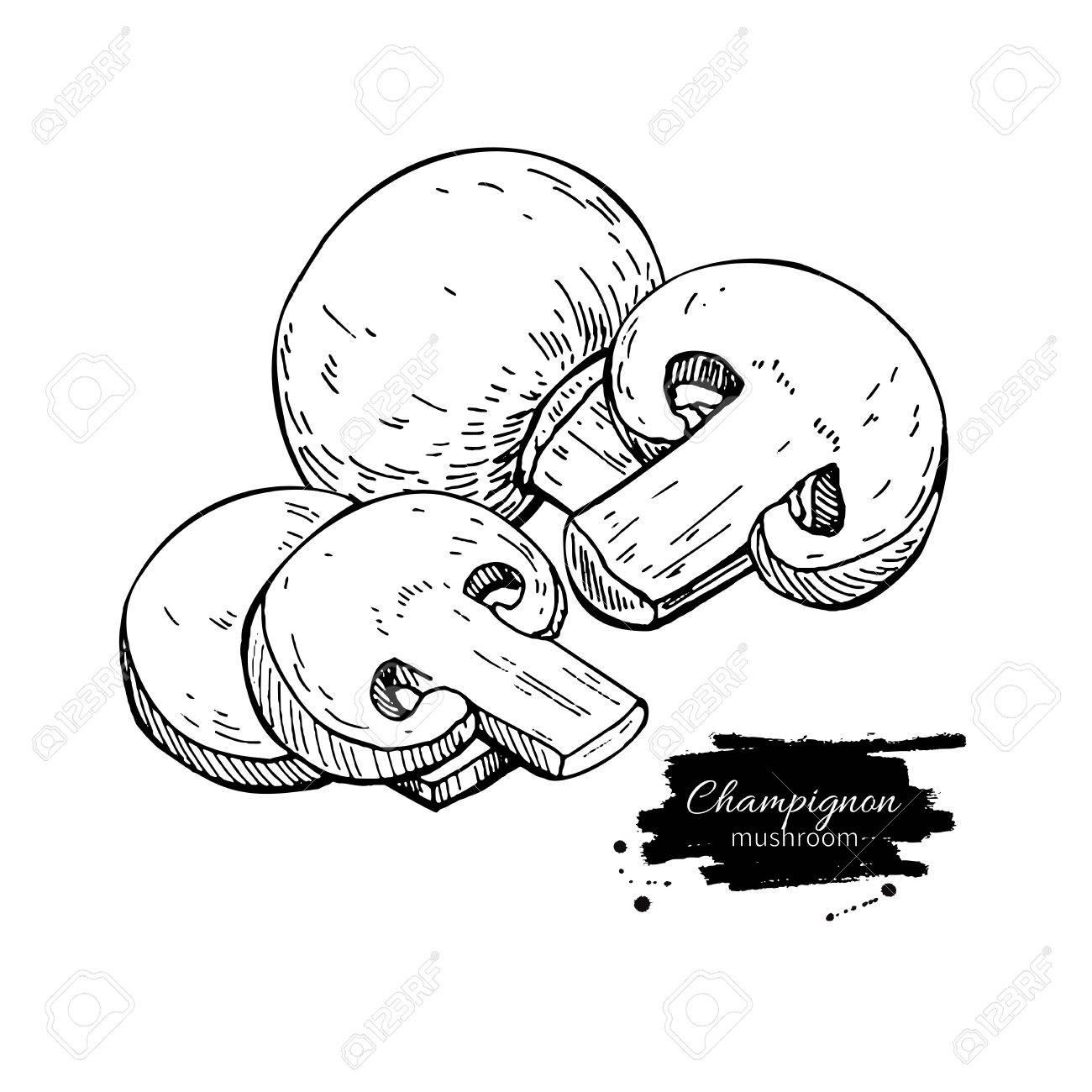 1300x1300 Champignon Mushroom Hand Drawn Vector Illustration. Sketch Food