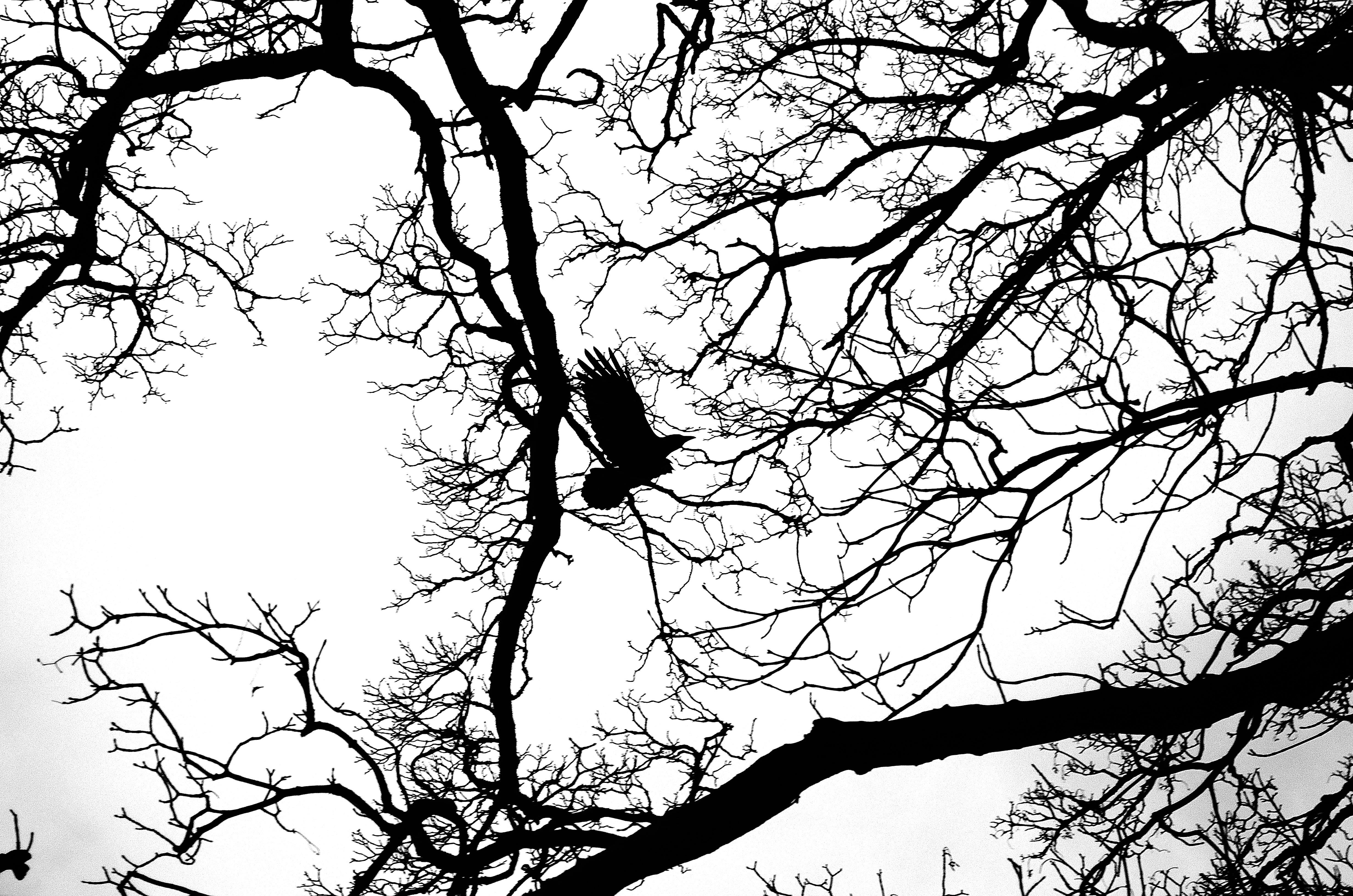 4928x3264 Free Images Tree, Nature, Branch, Silhouette, Bird, Light, Black