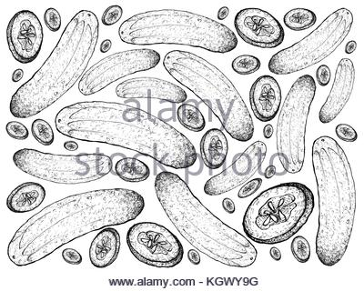 400x320 Gherkin, Cucumber Illustration, Drawing, Engraving, Line Art Stock