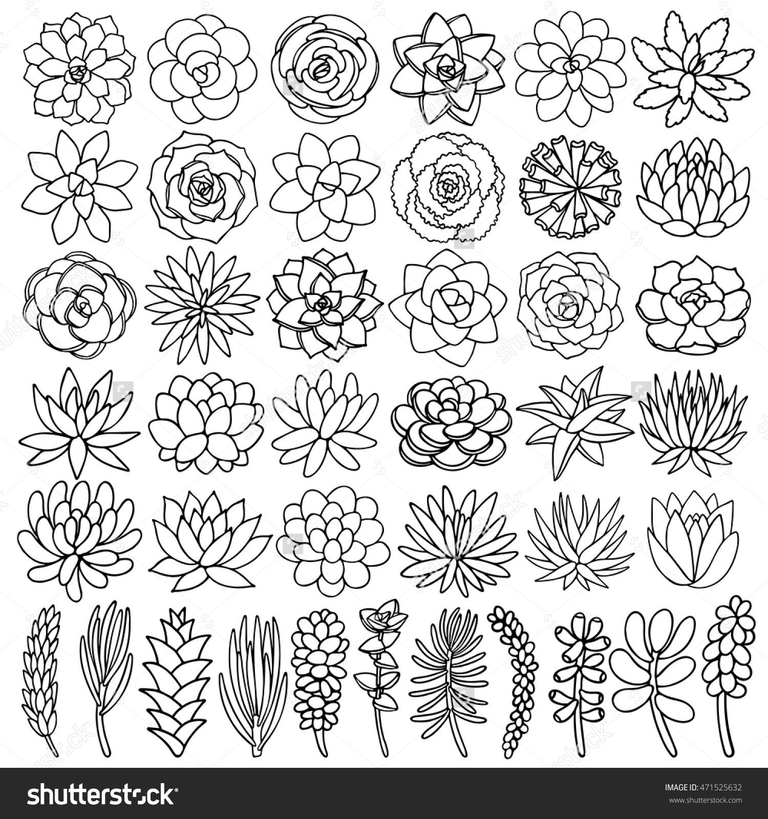 1500x1600 Hand Drawn Line Succulent Plant Isolated On White Background