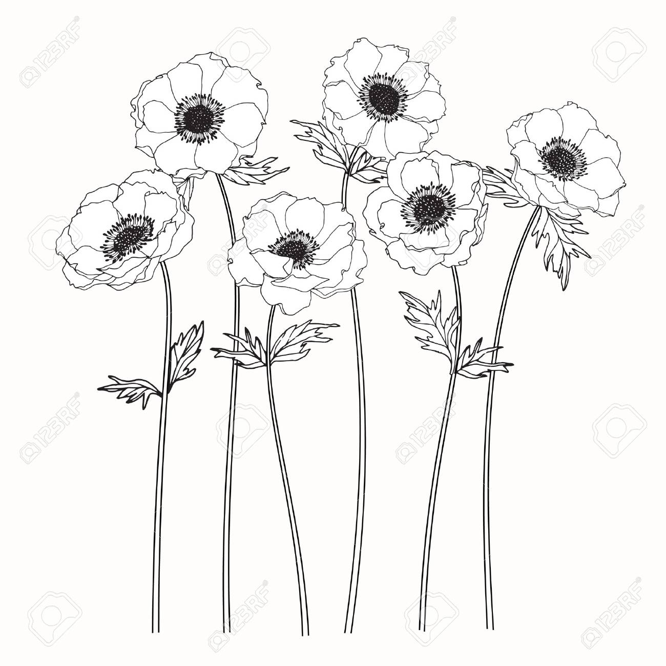 1300x1300 Anemone Flowers Drawing And Sketch With Line Art On White