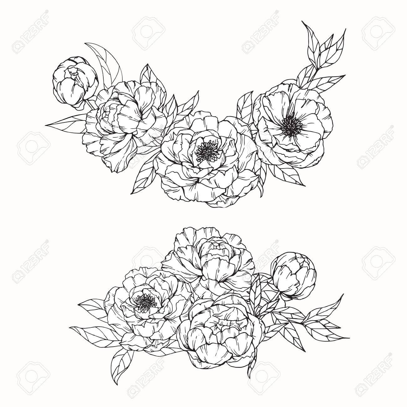1300x1300 Peony Flowers Drawing And Sketch With Line Art On White