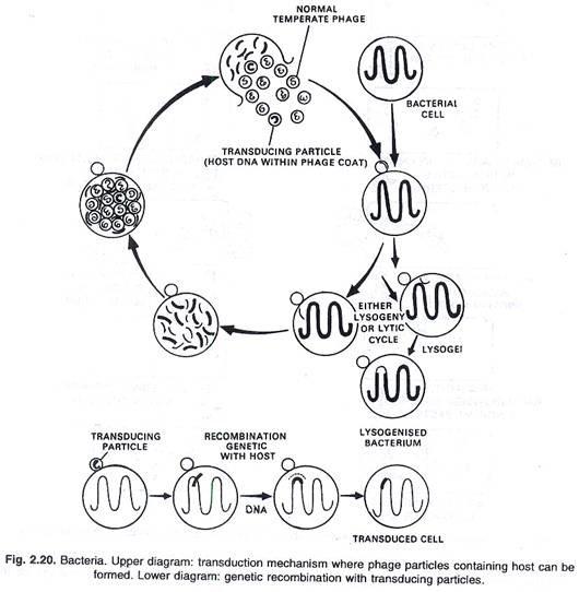 Bacteria Drawing