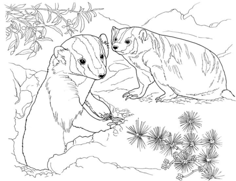 480x369 American Badgers In Garden Coloring Page Free Printable Coloring