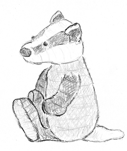 504x600 The Chubby Badger Sketch Son's Popkes
