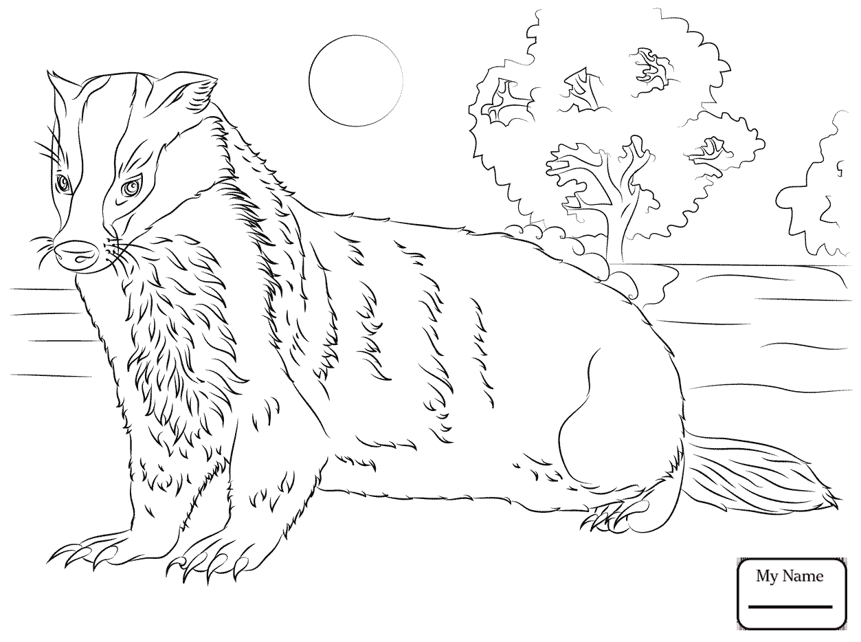 1253x934 Coloring Pages Mammals Badger 3