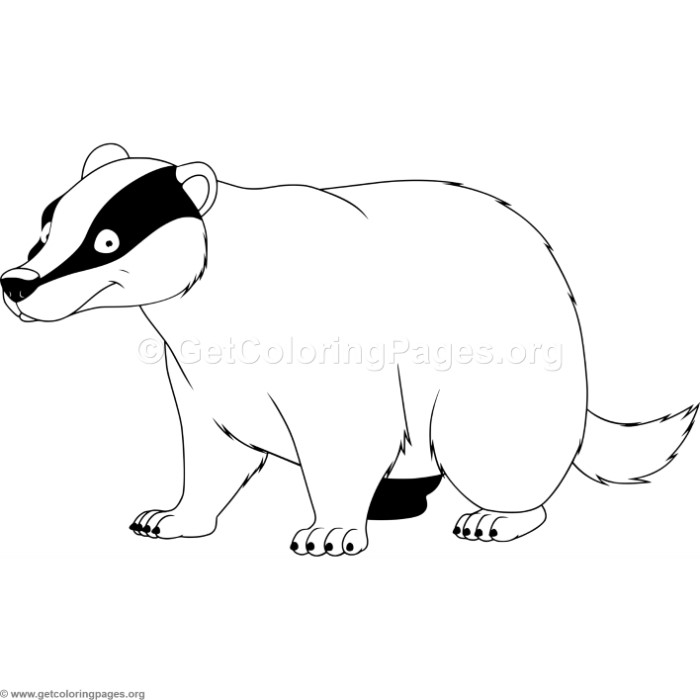 700x700 Badger Coloring Pages
