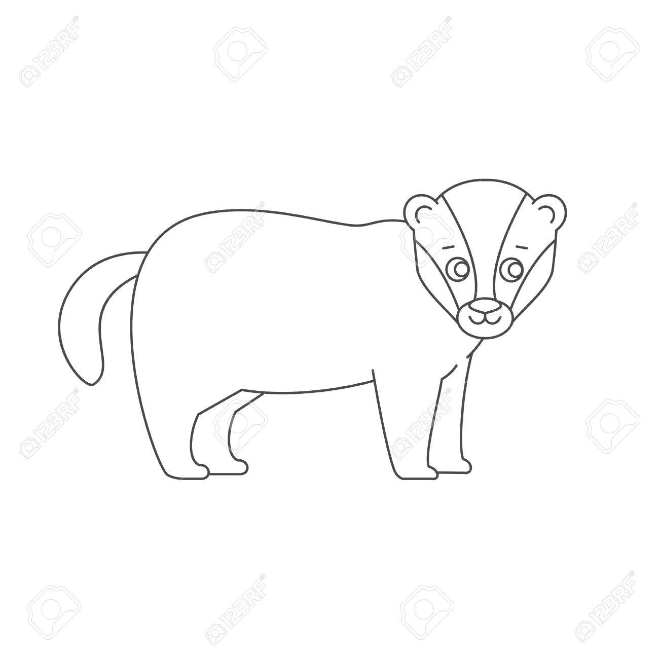 1300x1300 Badger For Coloring Book Stock Photo, Picture And Royalty Free