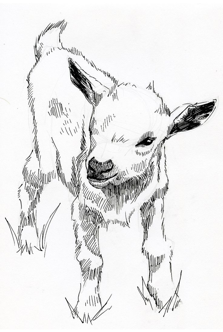 736x1095 12 Best Sketches By Jonathon B Baker Images