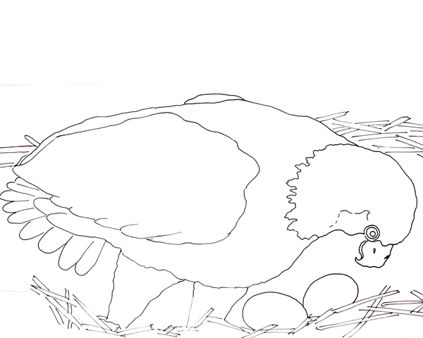 600x480 Caroline Arnold Art And Books BALD EAGLE AND EGGS Coloring Page
