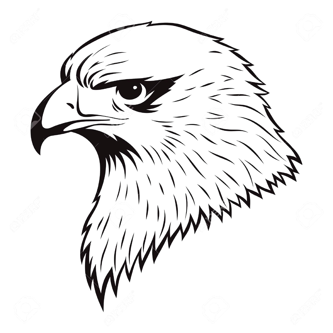 Bald Eagle Drawing Pictures At Getdrawings Com Free For Personal