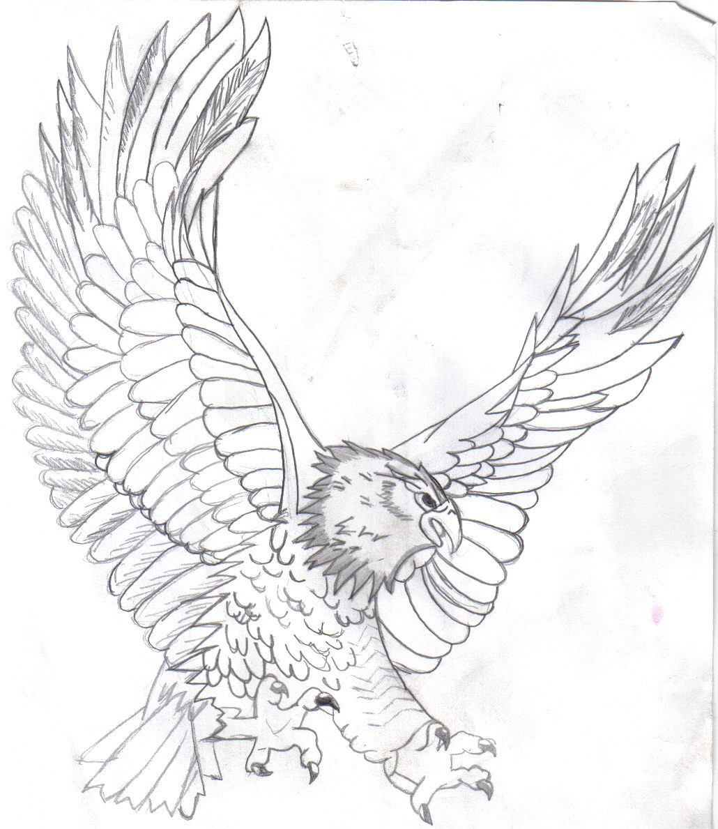 Bald Eagle Drawing Pictures at GetDrawings.com | Free for personal ...