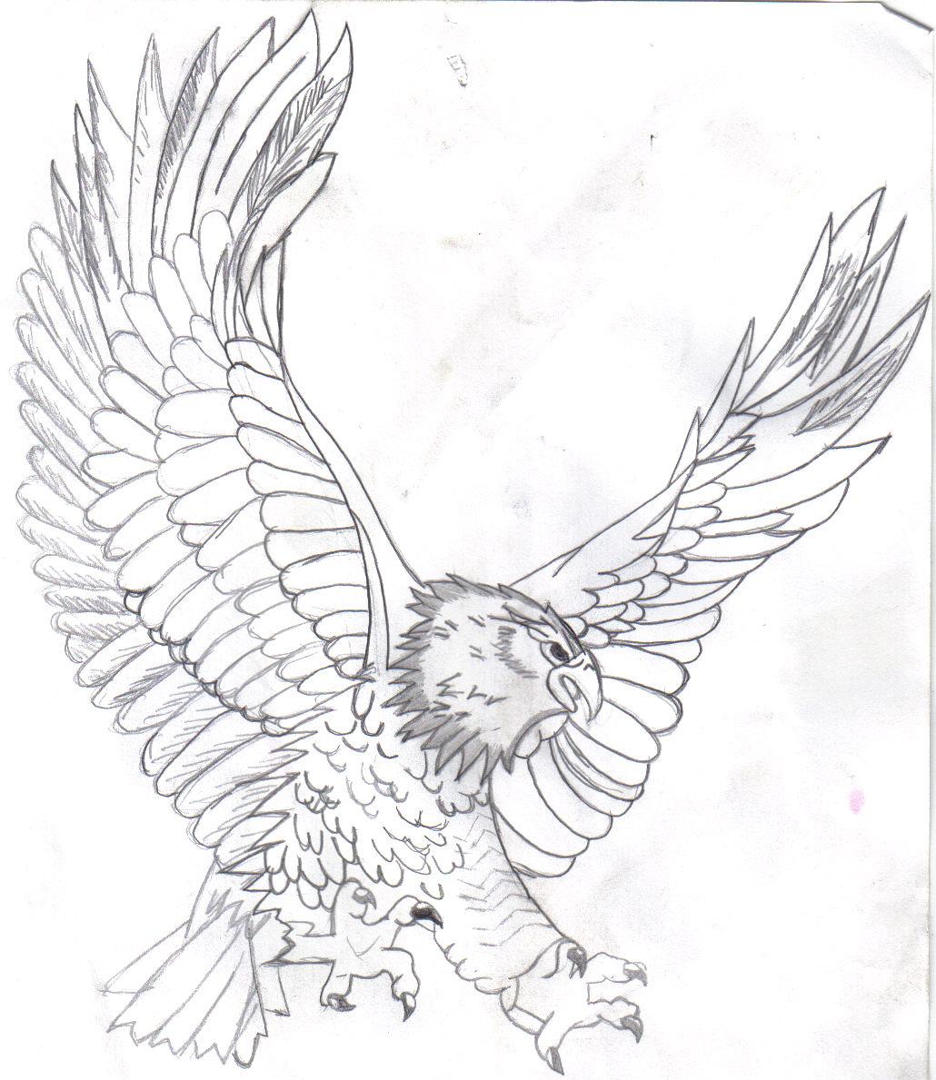 1030x1189 Eagle Sketch Drawing