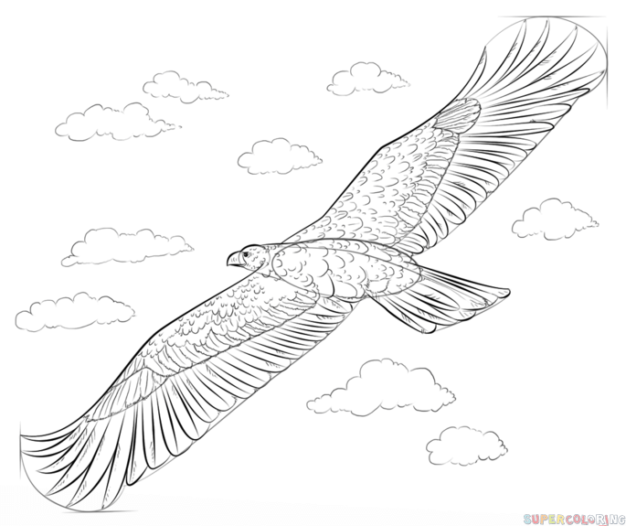 685x575 How To Draw A Golden Eagle Step By Drawing Tutorials