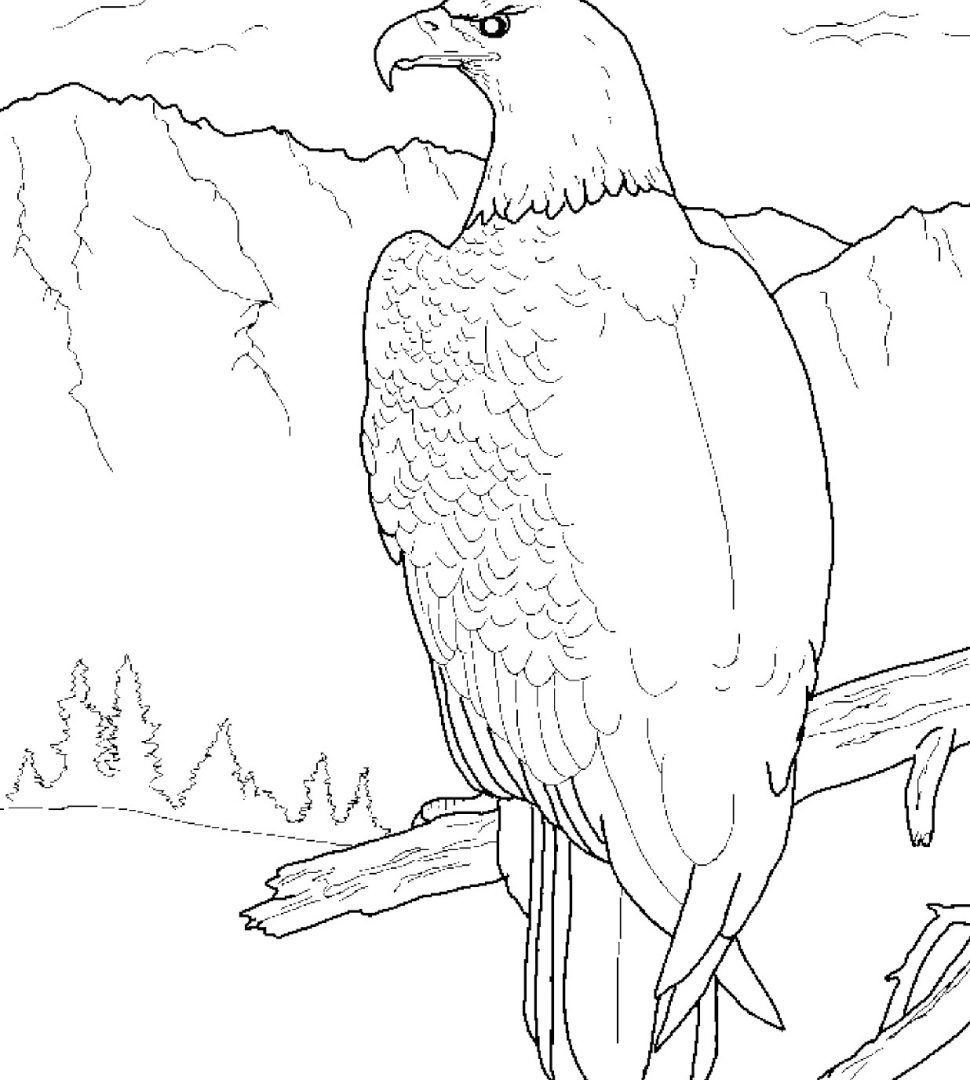 Bald Eagle Drawing Step By Step at GetDrawings.com | Free for ...