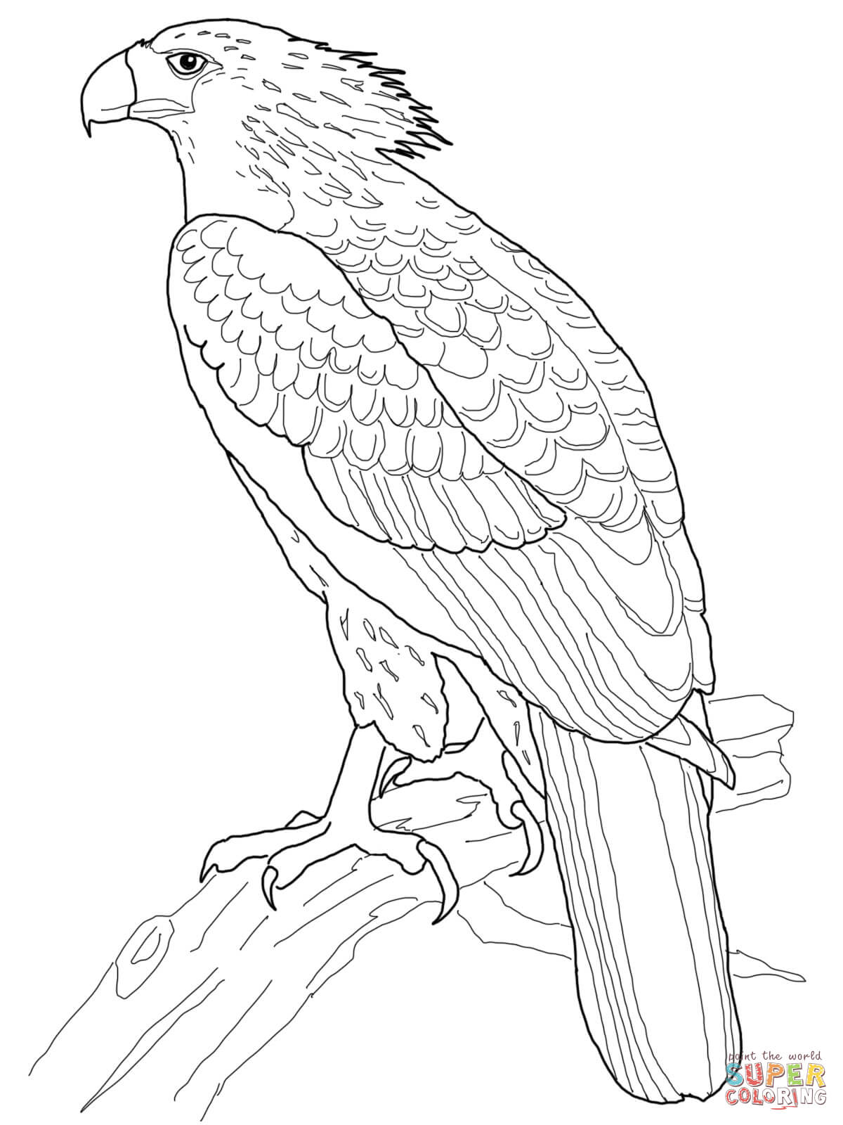 1200x1600 philippine eagle coloring page free printable coloring pages
