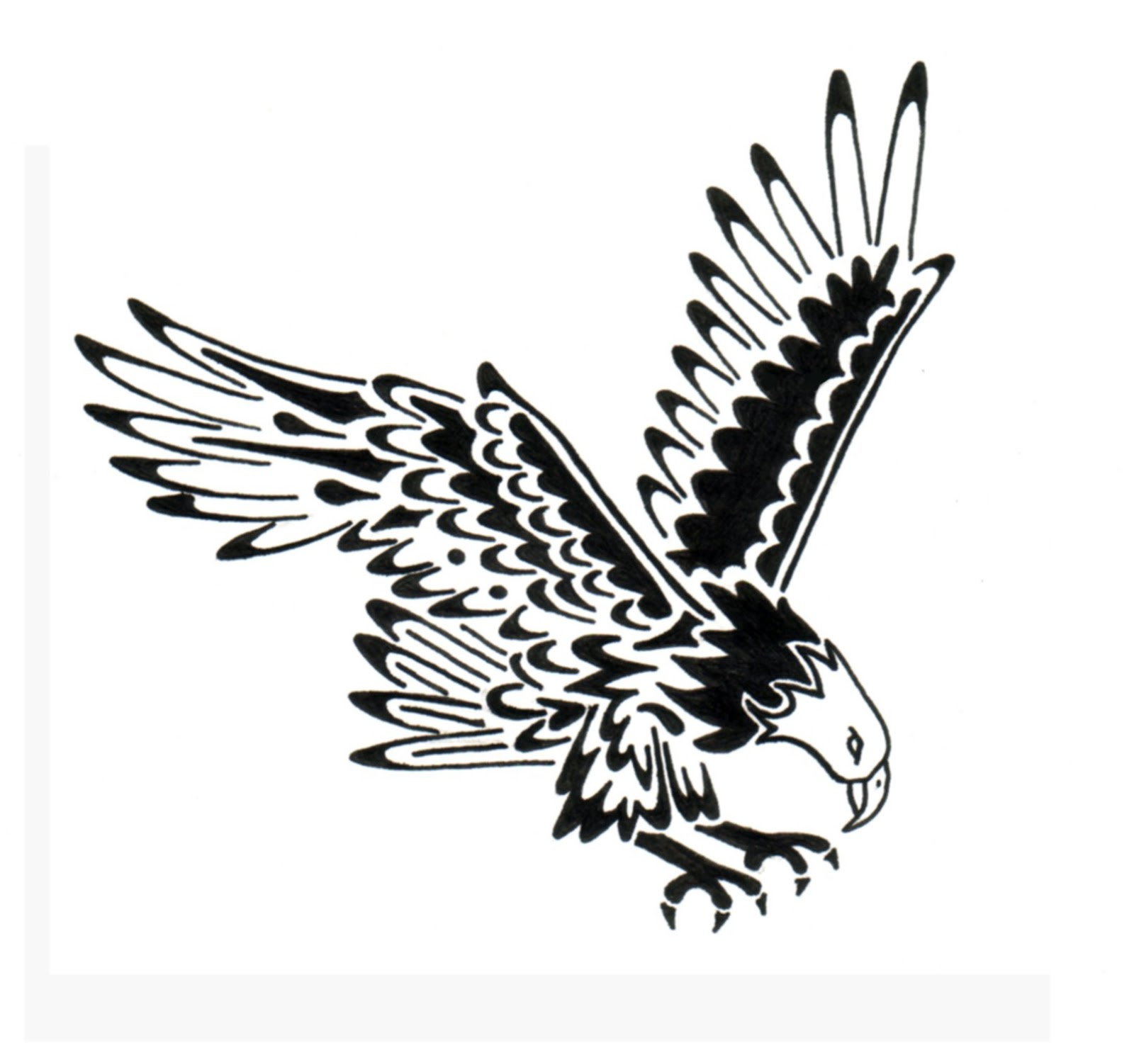 Bald Eagle Flying Drawing