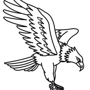 300x300 Eagle Begin To Fly Coloring Page