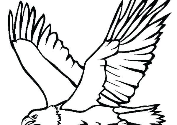 600x425 Bald Eagle Coloring Pages Eagle Color Page Bald Eagle Coloring