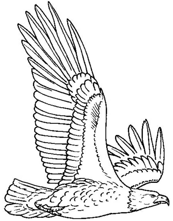 600x767 Bald Eagle Flying High Coloring Page