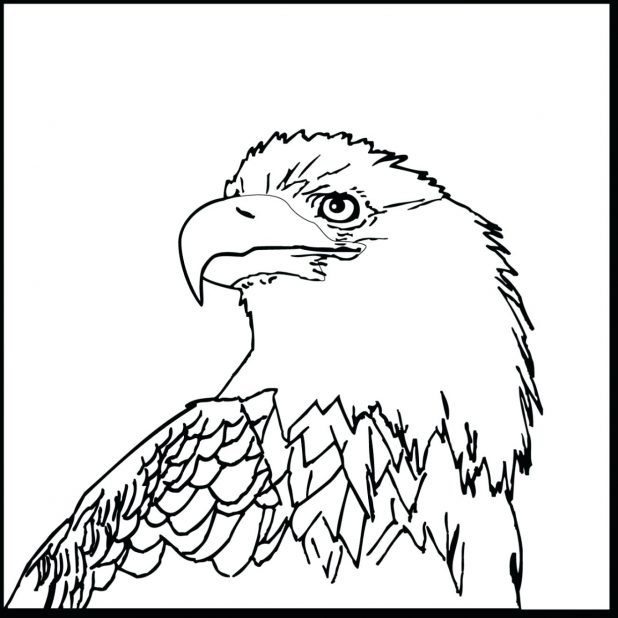 618x618 Coloring Pages Cool Eagle Sheet Bald Head