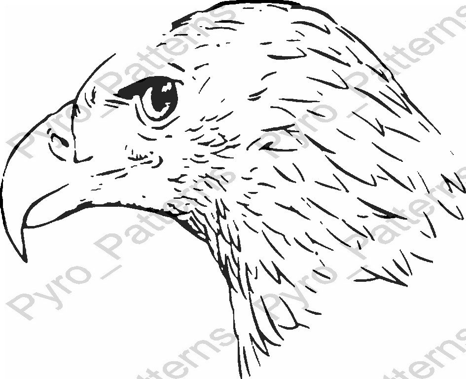 Awe Inspiring Bald Eagle Head Drawing At Getdrawings Com Free For Personal Use Wiring Digital Resources Remcakbiperorg