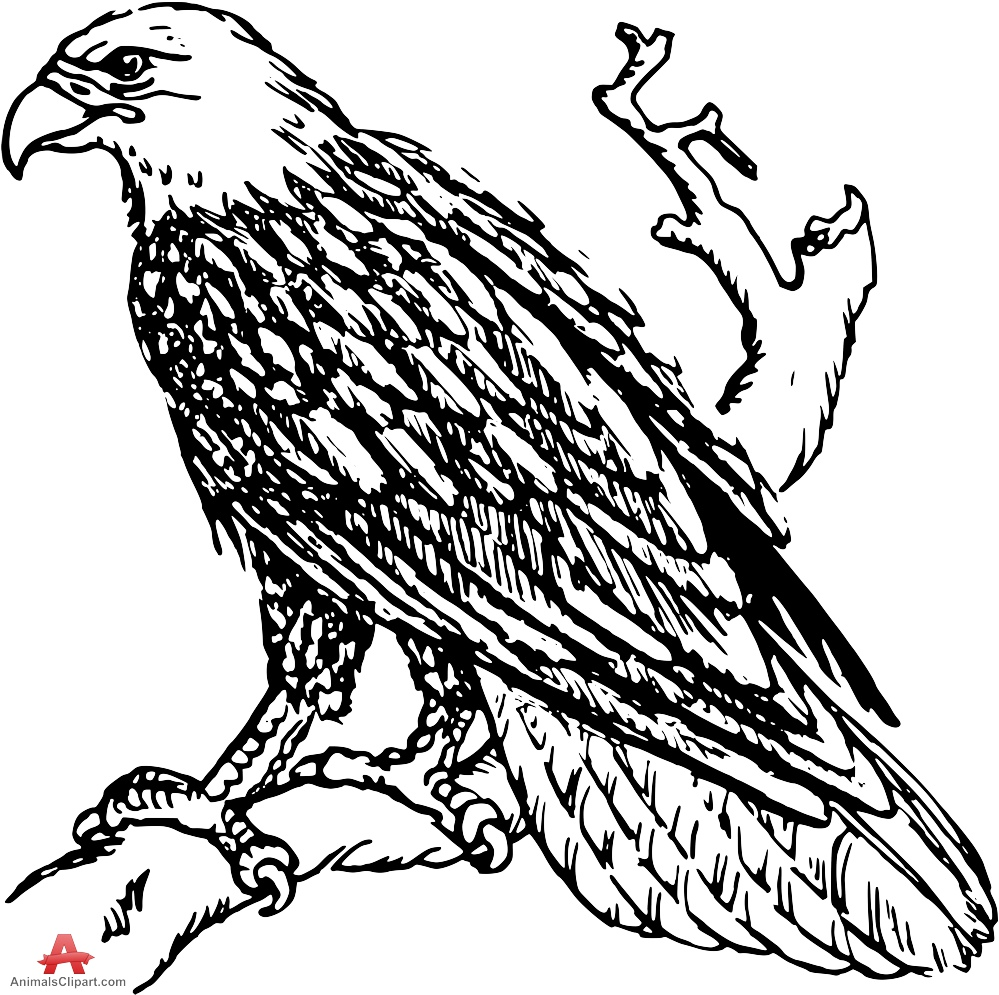 Bald Eagle Outline Drawing at GetDrawings.com | Free for personal ...