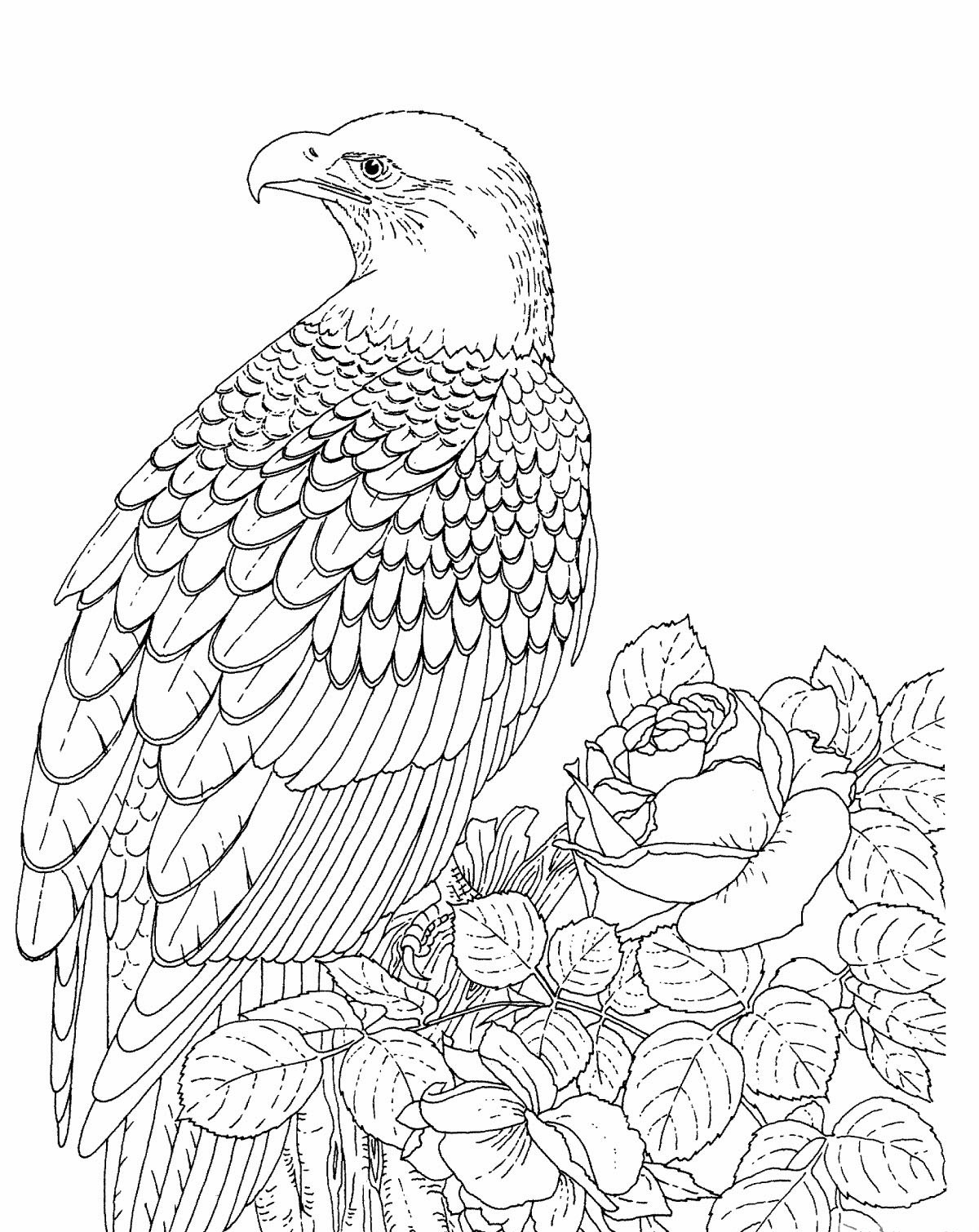 1200x1510 Free Printable Bald Eagle Coloring Pages For Kids