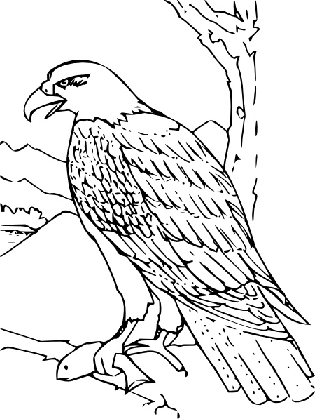 450x597 Bald Eagle Clipart Line Drawing