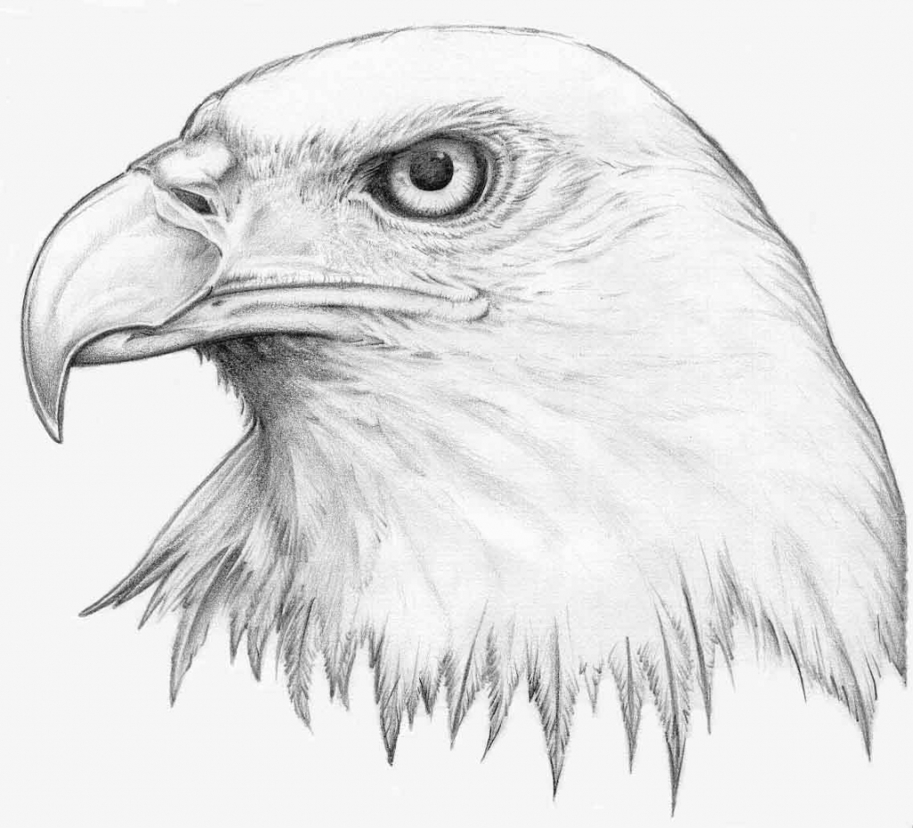 1024x929 Cartoon Eagle Pencil Drawings Easy Drawings And Sketches