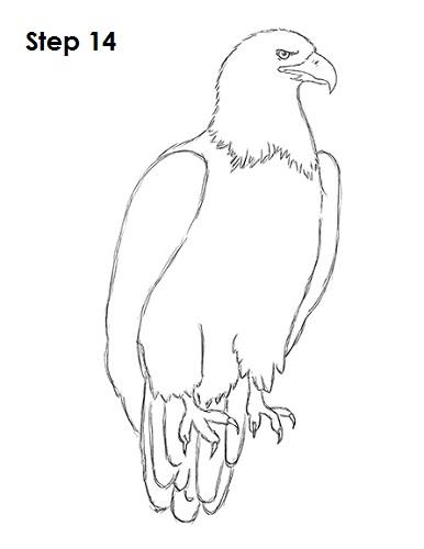 386x500 Drawn Bald Eagle Line Drawing