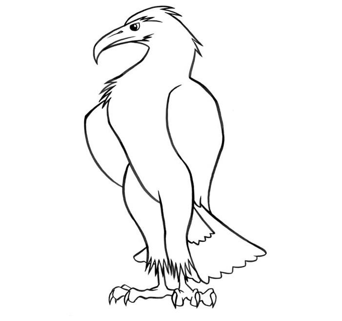 eagle template