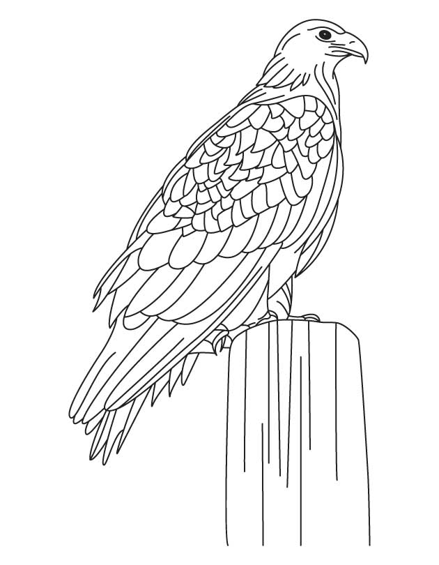 630x810 Eagle Coloring Page 486065