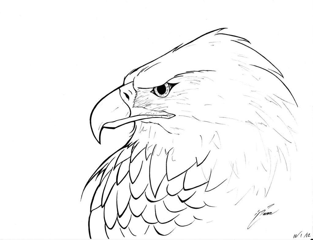1021x783 Eagle Head Pencil Drawing Easy