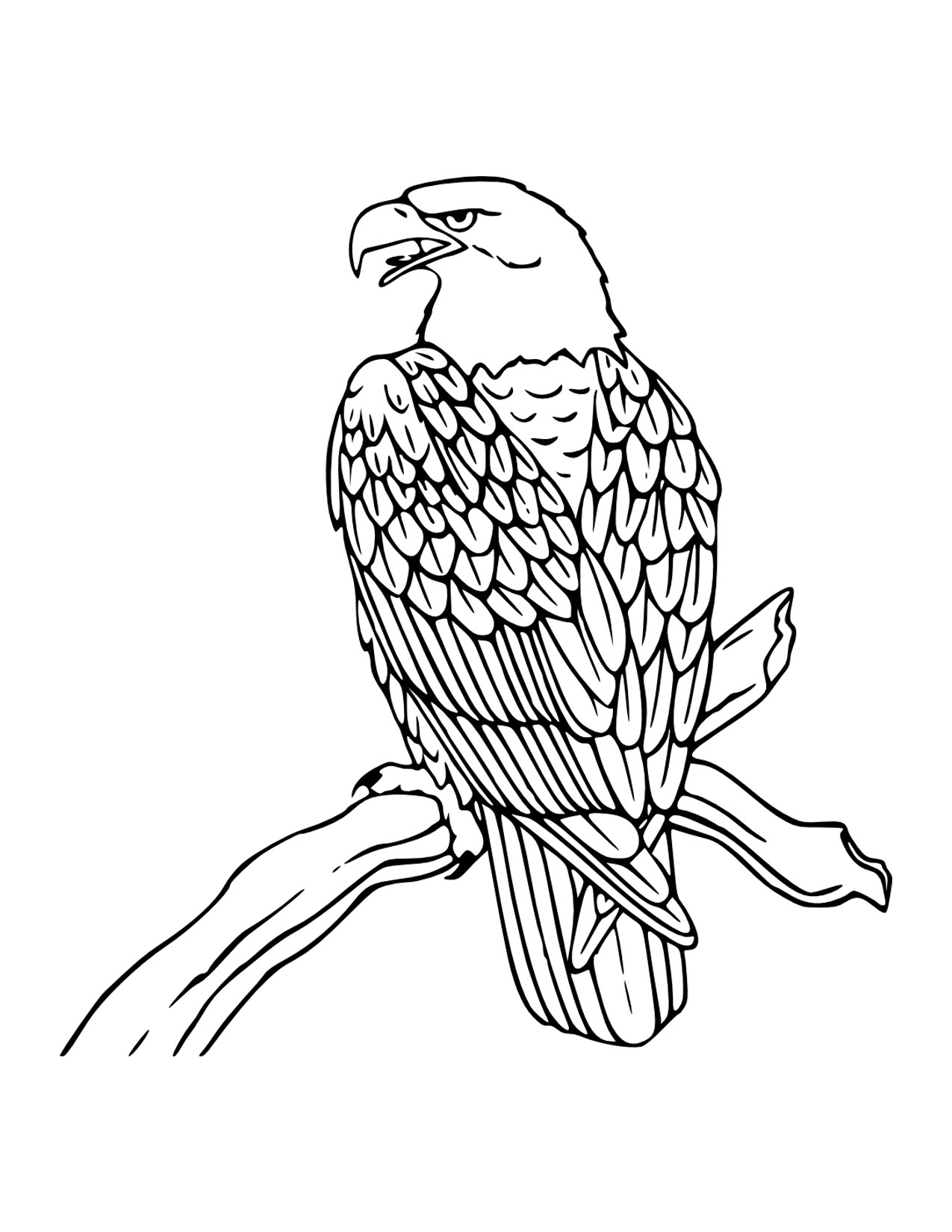 1275x1650 Free Eagle Coloring Pages With Printable Bald Eagle Coloring Pages