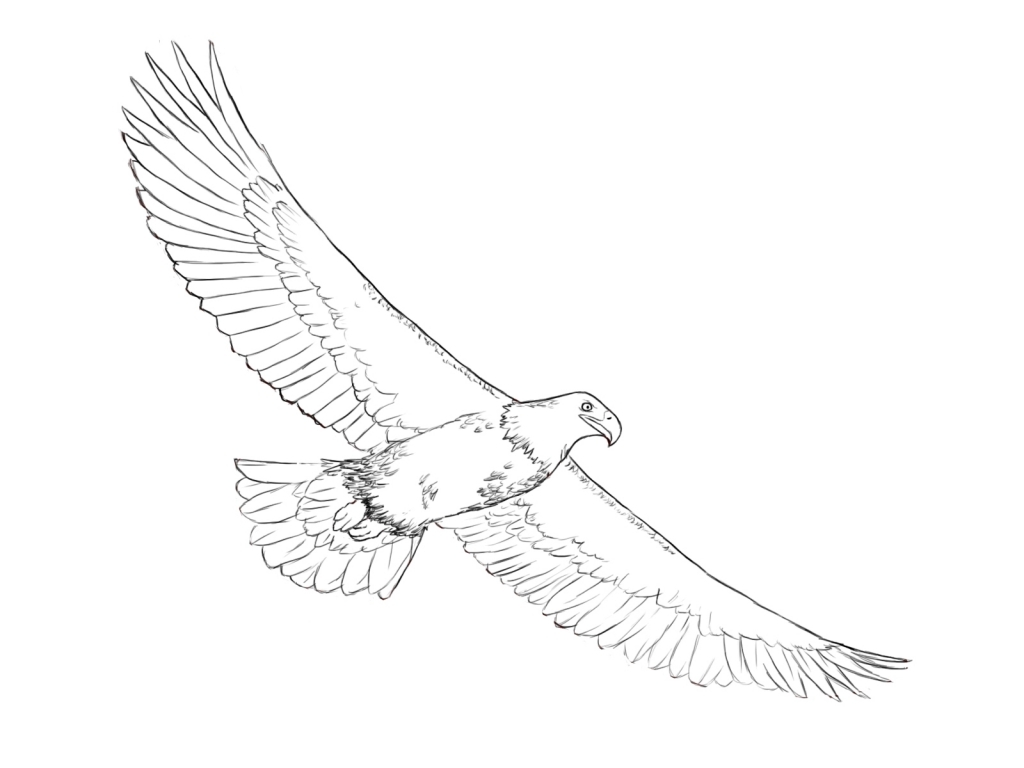 1024x768 How To Draw A Eagle How To Draw An Eagle Draw Central