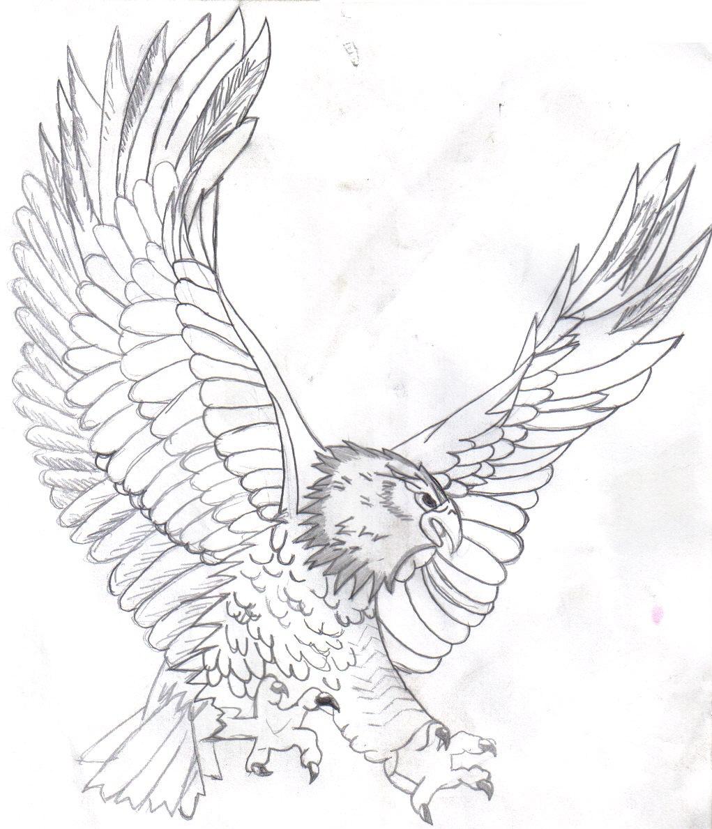 1021x1189 Printable Bald Eagle Drawings