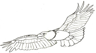 400x223 How To Draw Eagles Bald Eagle Pencil Drawing, Step 5 Crafts