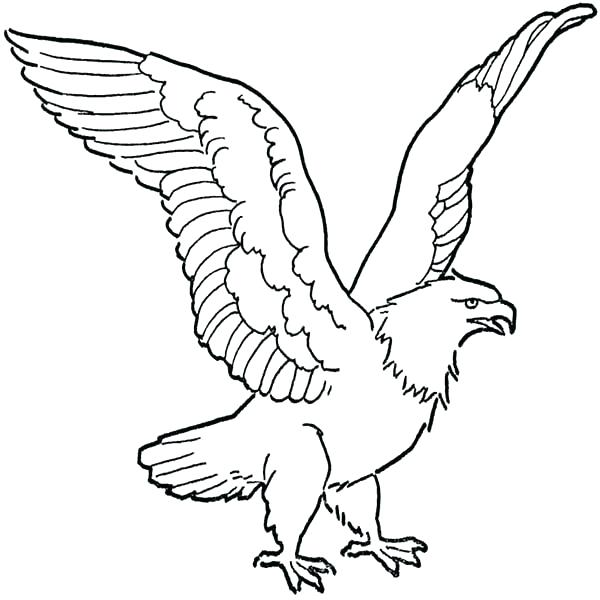 600x600 Bald Eagle Coloring Pages Eagle Coloring Pages Eagle Coloring