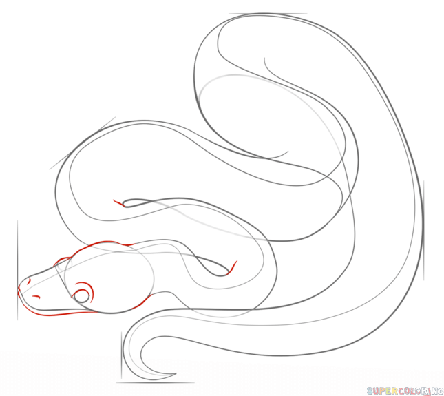 645x575 How To Draw A Ball Python Step By Step. Drawing Tutorials For Kids