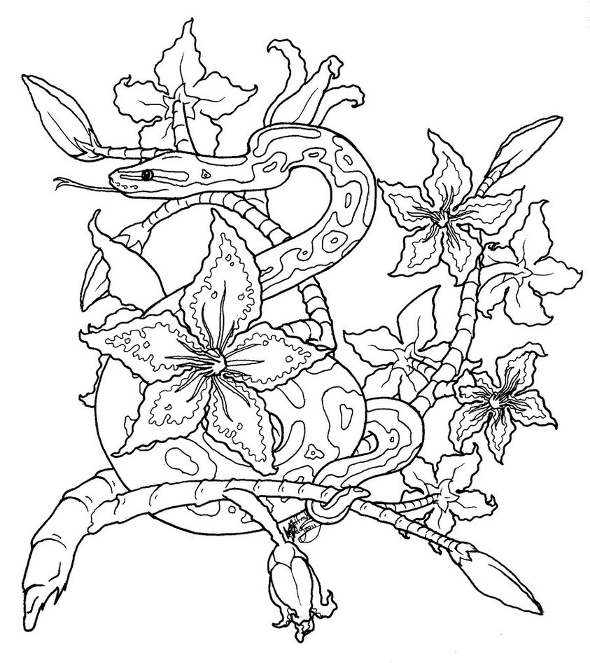 843x947 Royal Python Tattoo Lineart By Dranixparemoon