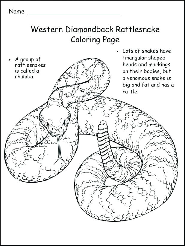 618x819 Trend Ball Python Coloring Pages Best Of Rattlesnake Page Timber