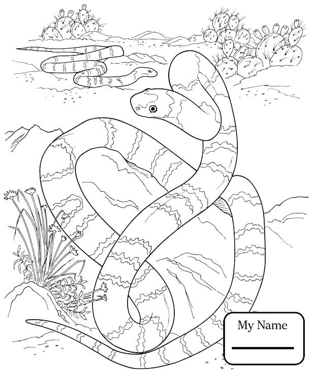 614x734 Reptiles Coloring Pages
