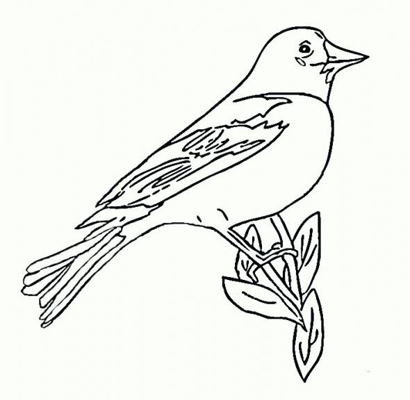 590x576 Birds To Draw Images Bird Artwork Doodles On Baltimore Ravens