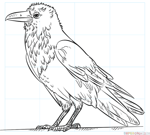 639x575 How To Draw A Raven Step By Step Drawing Tutorials